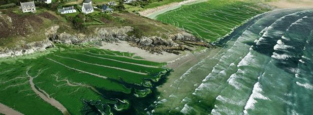 De nitraten in de Vilaine zorgen voor algen bij zoutbassins van Keltisch zeezout in de Guérande