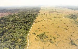 Deforestation de la foret amazonienne