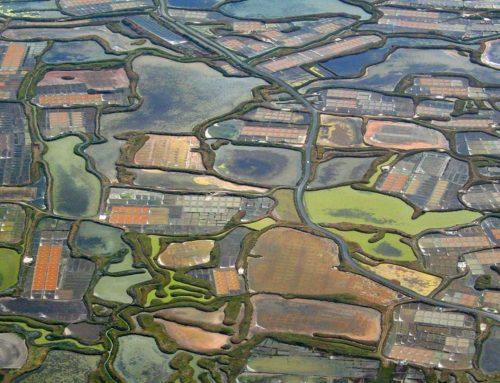 Keltisch zeezout en vervuiling in het Guérande bassin