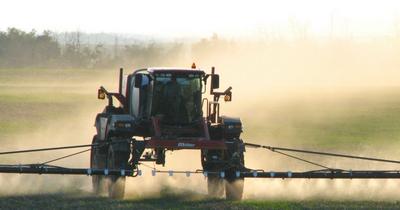 Le soja est mauvais pour la santé: plein de pesticides et de substances chimiques