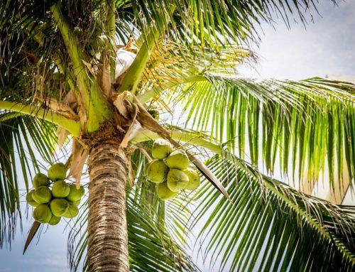 19 redenen waarom kokosolie zo gezond is
