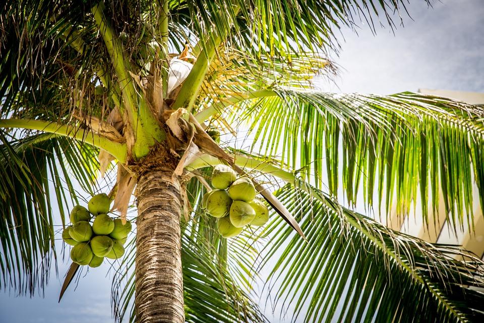 19 redenen waarom kokosolie gezond is