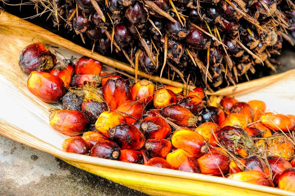 Vitamine E supplement? Kies natuurlijke tocoferol en tocotriënol uit rode palmolie