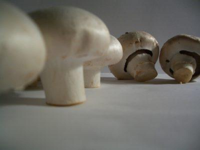 Agaricus mushroom with vitamin D