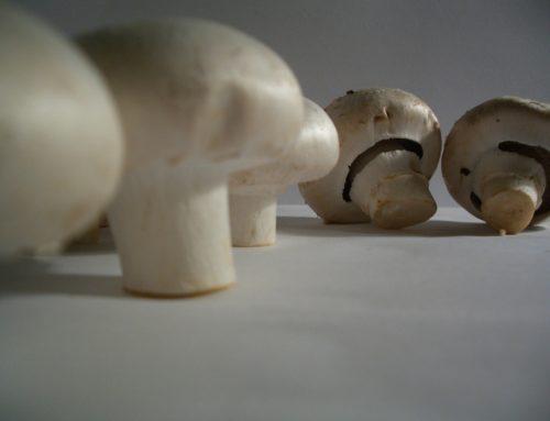Der medizinale Agaricus-Pilz mit Vitamin D
