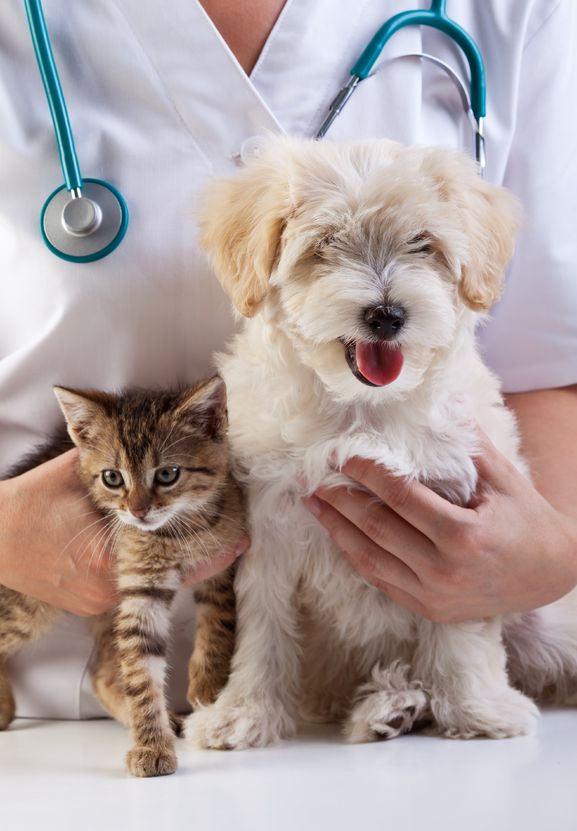 Kokosolie dierenvoeding voor huisdieren