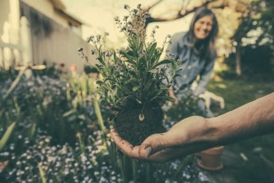 Adaptogènes / Plantes médicinales du mélange d'herbes Botanico d'Amanprana