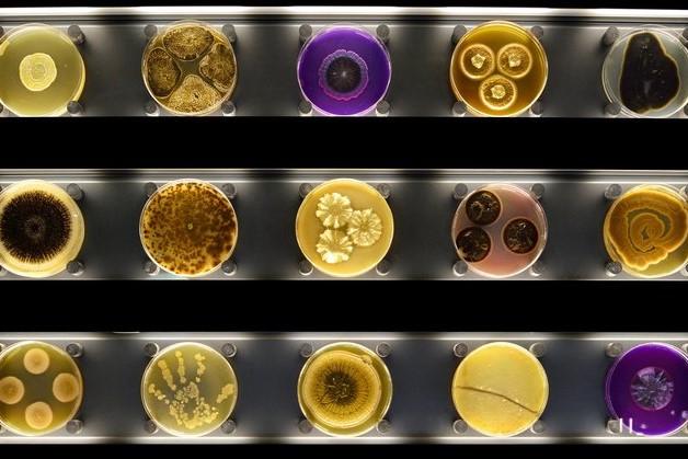 microben in Artis-micropia