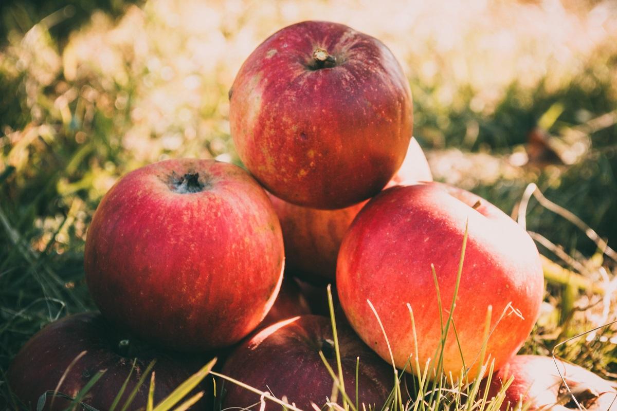 vinaigre de pomme à base de pommes biologiques avec la mère pour la santé